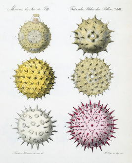 Pollen grains from various plants.