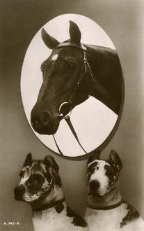 Portrait of a horse and two hounds