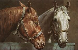 Portrait of two horses