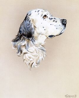 Portrait painting of an English Setter Dog