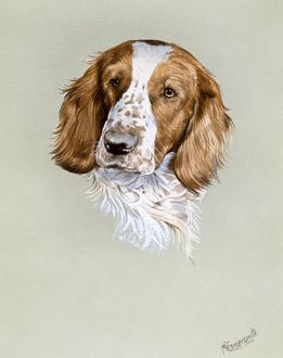 Portrait painting of a spaniel