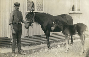 new items grenville collins collection/stablehand charges horse foal