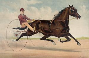 Trotting stallion Phallas, driven by Ed. Bithers: by Dictato