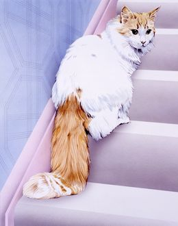 White cat with ginger tail/face on stairs
