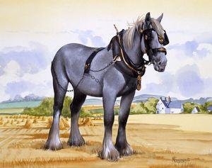 A working heavy horse